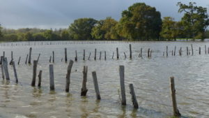 Vidéo sur les crues et bras oubliés de la Vilaine à Acigné (hiver 2019-2020)